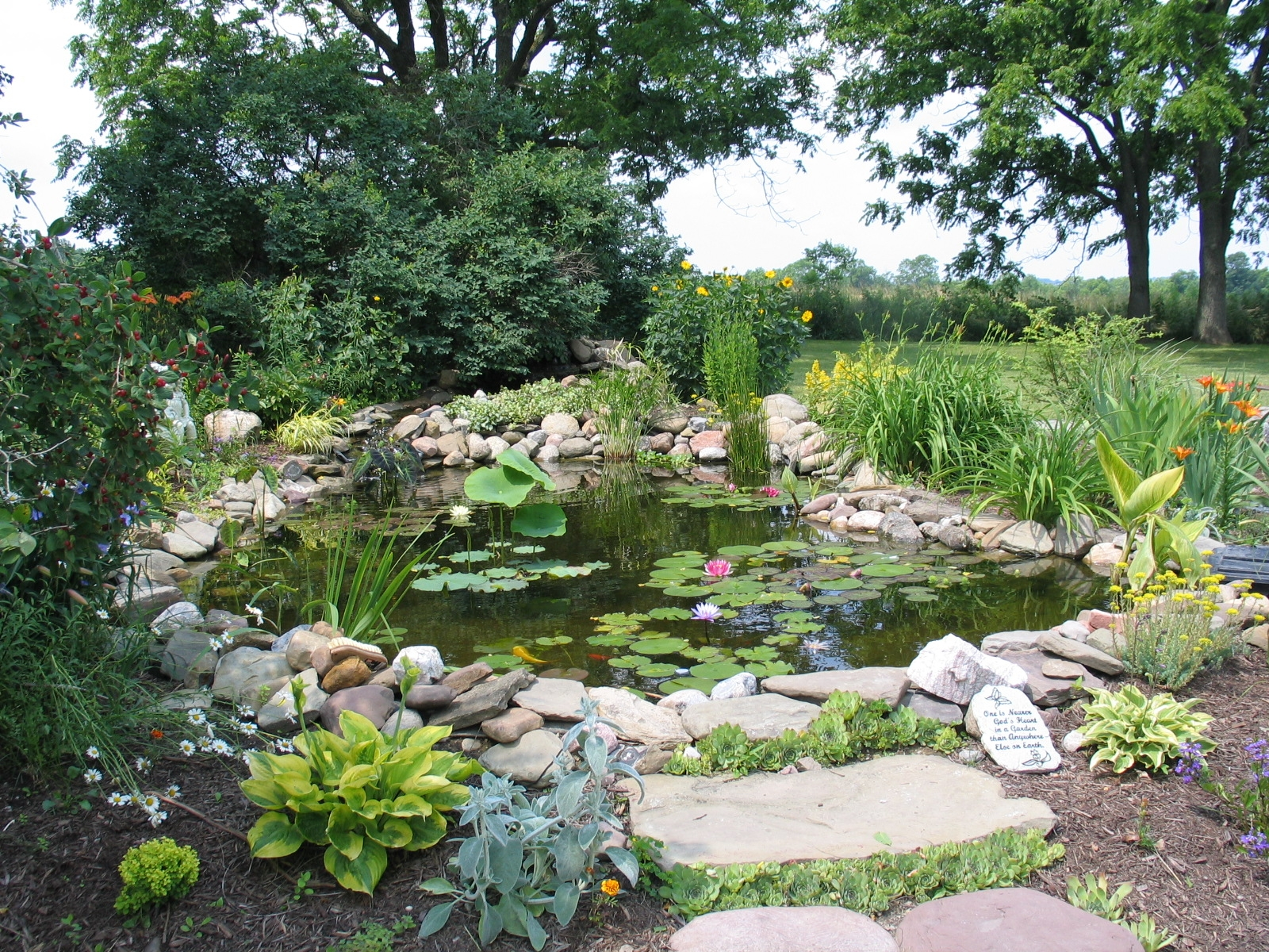 Seasonal pond care archives dragonfly aquatics for Pond plant filter